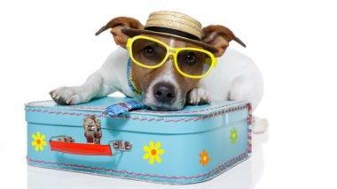 Tourist Phuket Dog