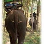 Elephant riding phuket