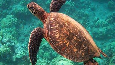 Snorkel in Phuket