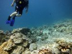 All About Diving in Phuket