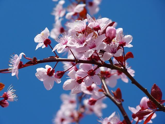 Japan: 10 Places to See Cherry Blossoms