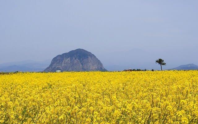 9 Highlights of Jeju Island, South Korea